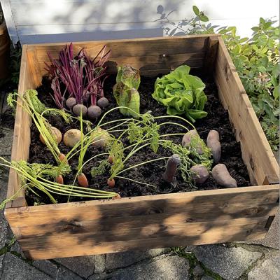 RSPB Vegetable Planter